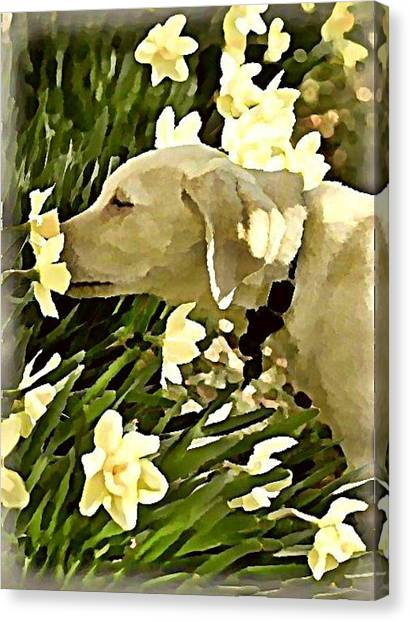 Canvas Print - Daffodil Dog by Raven Hannah