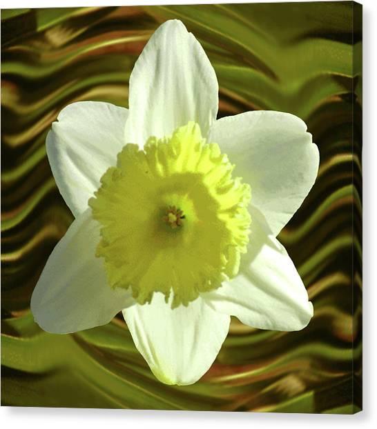 Daffodil Swirl Canvas Print