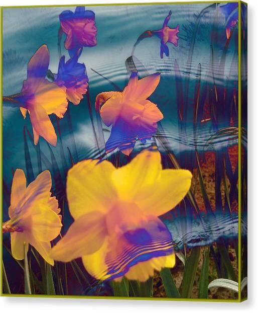 Daffodils #1 Canvas Print