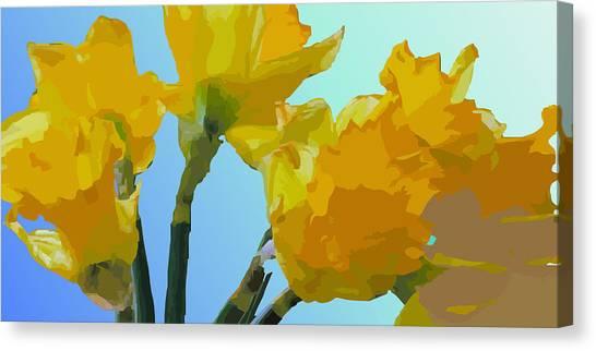 Daffodils Canvas Print by Robert Bissett