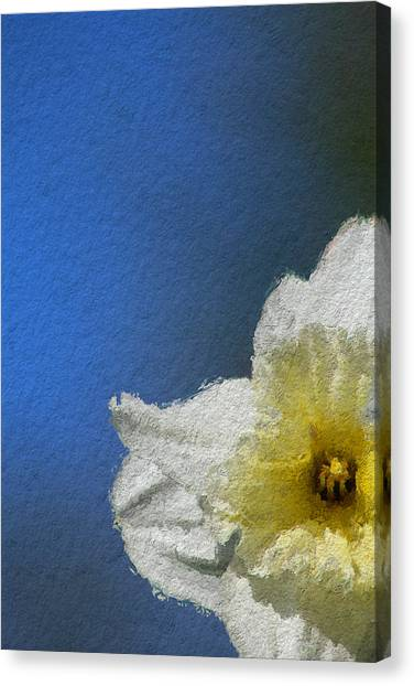 Canvas Print - Daffydowndilly One by Modern Art