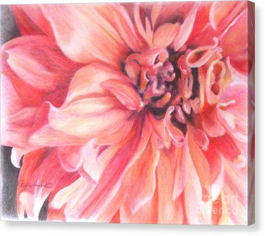 Canvas Print featuring the drawing Dahlia 1 by Phyllis Howard