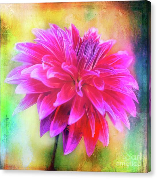 Dahlia Abstract Canvas Print