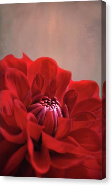 Dahlia Dalliance  Canvas Print