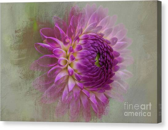 Dahlia Dream Canvas Print