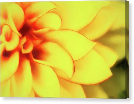 Dahlias Canvas Print - Dahlia Flower Abstract by Tom Mc Nemar