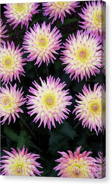 Karma Canvas Print - Dahlia Karma Sangria Flowers by Tim Gainey