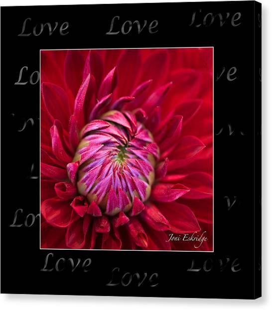 Dahlia Of Love Canvas Print