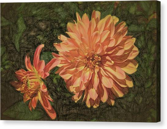 Dahlia Sketch Canvas Print