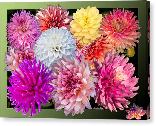Canvas Print featuring the photograph Dahlias Of The Yukon by Claudia Abbott