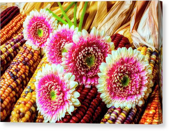 Indian Corn Canvas Print - Daises On Indian Corn by Garry Gay
