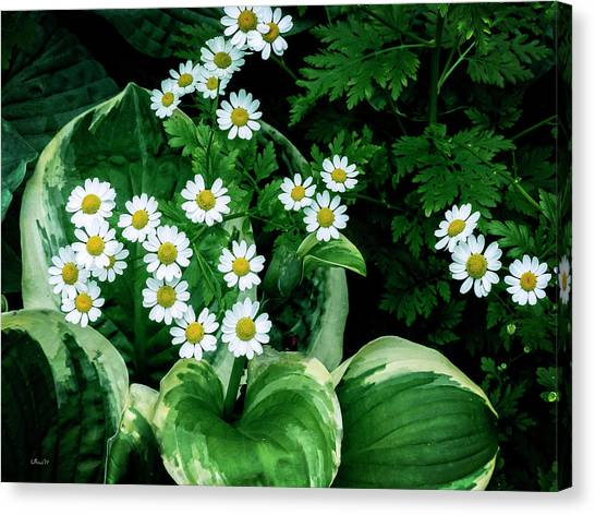 Daisies And Hosta In Colour Canvas Print