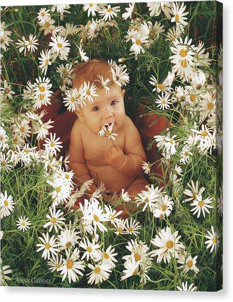 Daisy Canvas Print - Daisies by Anne Geddes