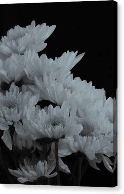 Daisies In Black And White Canvas Print