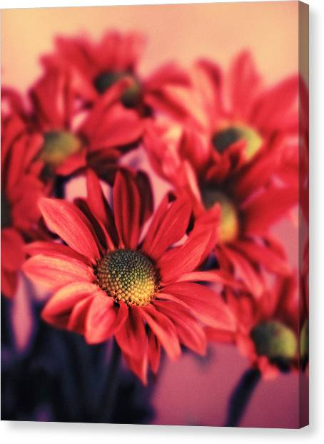 Daisy 3 Canvas Print by Joseph Gerges