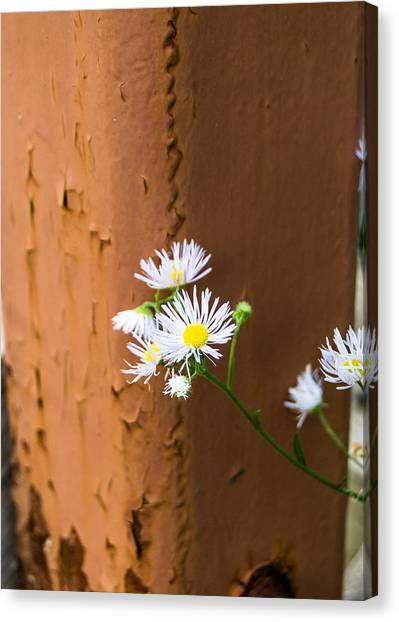 Daisy And Rust Canvas Print