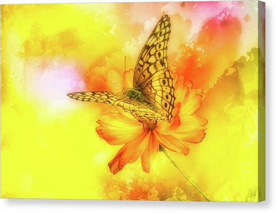 Daisy For A Butterfly Canvas Print