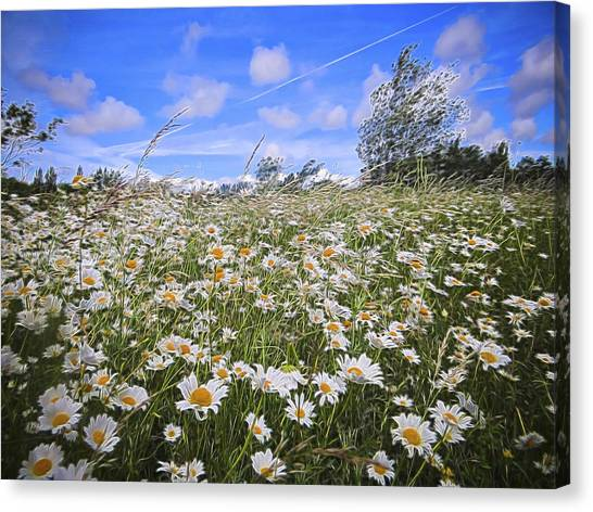 Daisy Heaven Canvas Print by Angela Aird