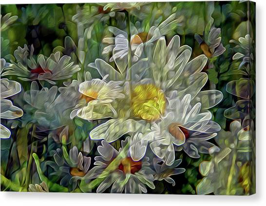 Daisy Mystique 8 Canvas Print
