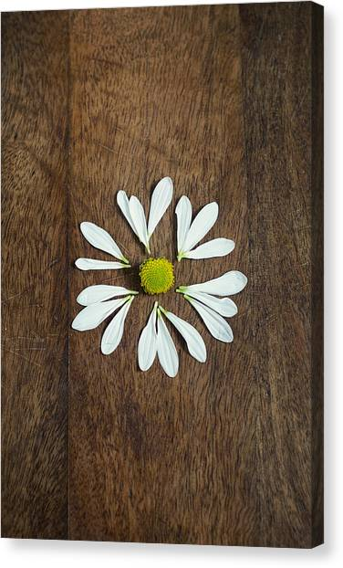 Daisy Petals On Wooden Background  Canvas Print
