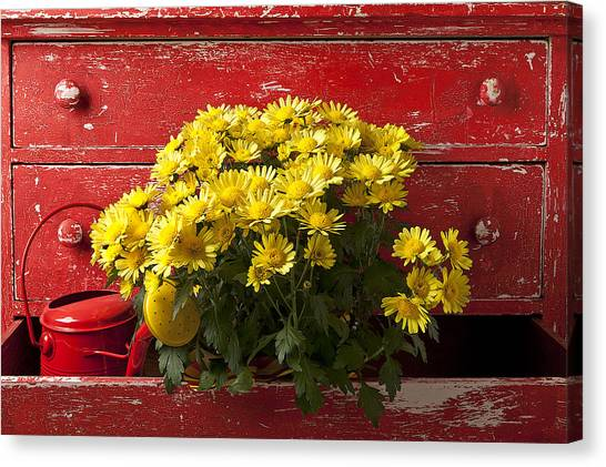 Drawers Canvas Print - Daisy Plant In Drawers by Garry Gay