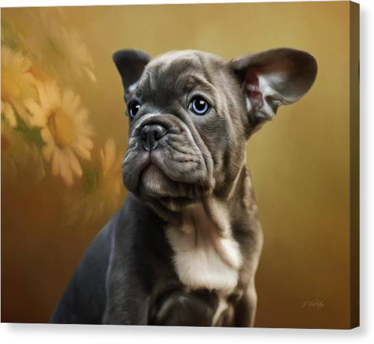 French Bull Dogs Canvas Print - Daisy - Puppy Art by Jordan Blackstone