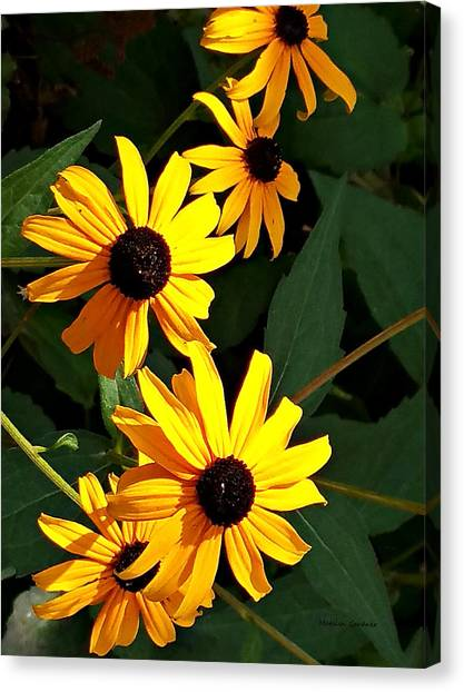 Daisy Row Canvas Print
