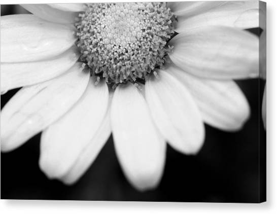 Daisy Smile - Black And White Canvas Print