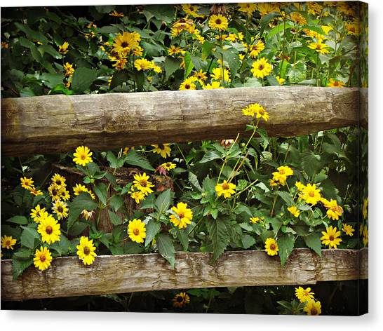 Daisy's Fence Canvas Print