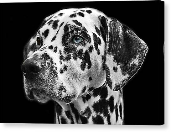 Dalmations Canvas Print - Dalmation Headshot by Billy Soden