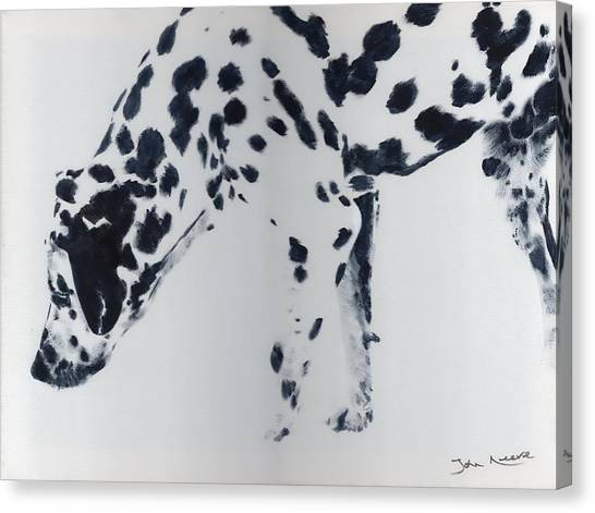 Dalmation Canvas Print
