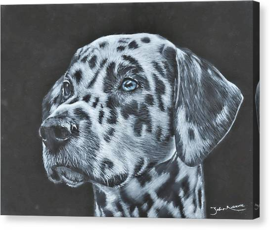Dalmation Portrait Canvas Print