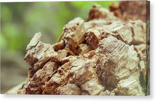 Damaged Wooden Beam Close Up Canvas Print by Vlad Baciu