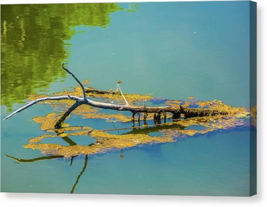 Damselfly On A Lake Canvas Print