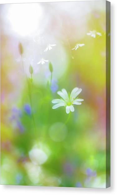 Dance Of The Nature Spirits Canvas Print