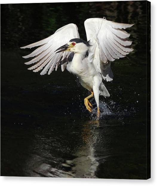 Dance On Water. Canvas Print