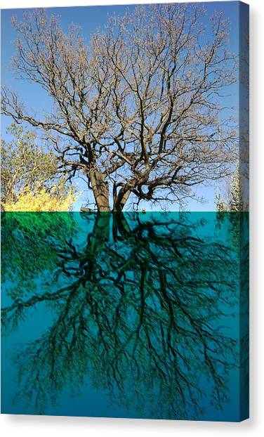 Dancers Tree Reflection  Canvas Print