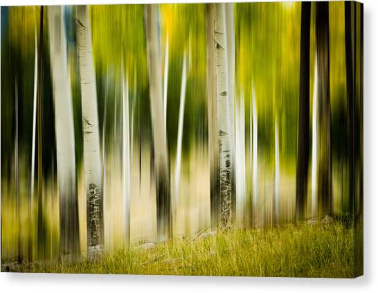 Dancing Aspens Canvas Print