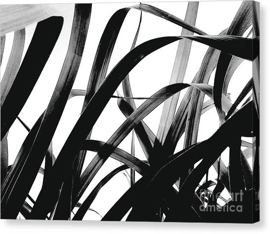Organic Black Canvas Print