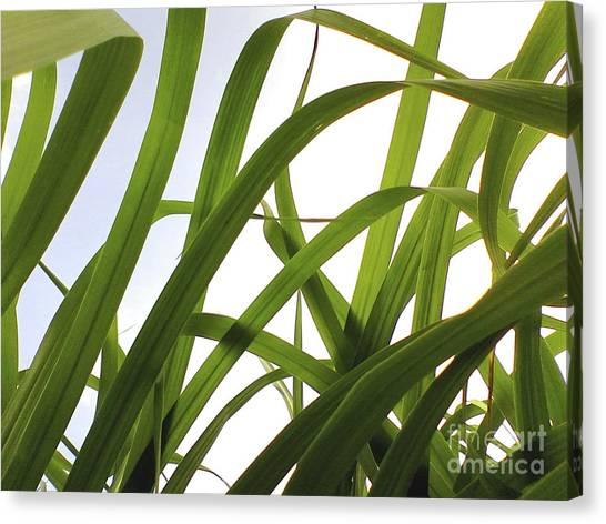 Organic Green Canvas Print