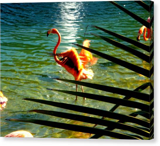 Dancing Flamingo Canvas Print
