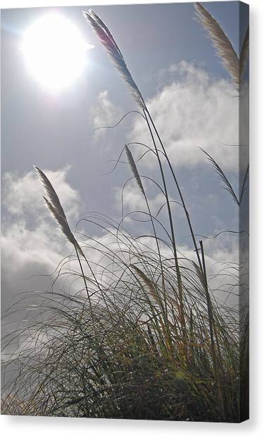 Dancing Grass Canvas Print by Jean Booth