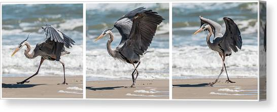 Canvas Print featuring the photograph Dancing Heron Triptych by Patti Deters