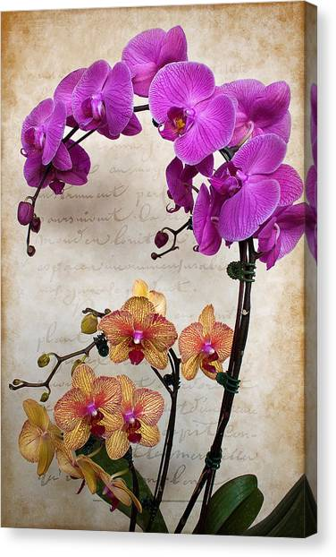 Dancing Orchids Canvas Print