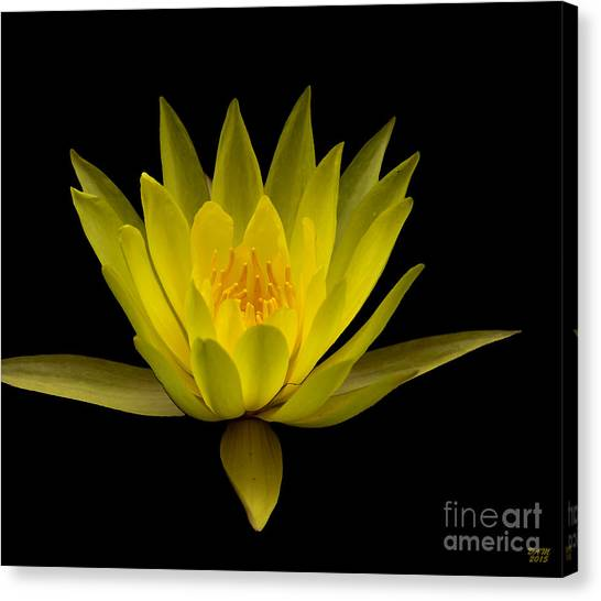 Dancing Yellow Lotus Canvas Print