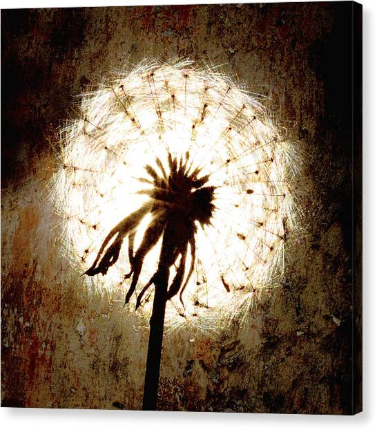 Dandelion Art 5 Canvas Print by Falko Follert