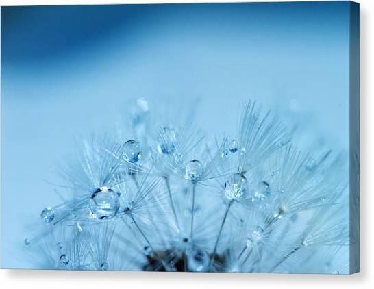 Dandelion Bouquet Canvas Print