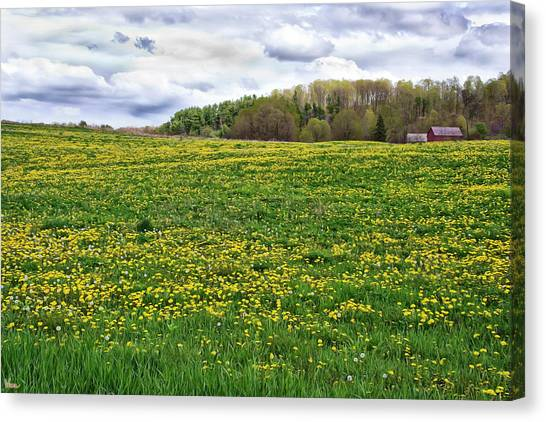 Dandelion Field With Barn Canvas Print