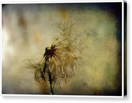 Dandelion Flower Canvas Print by Valmir Ribeiro