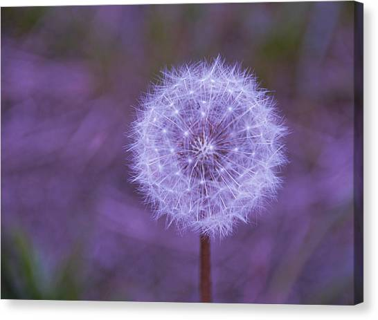 Dandelion Geometry Canvas Print